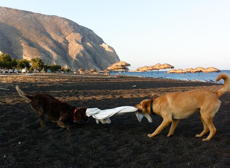Santorini__dogs