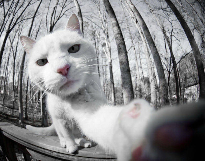 Cat Selfie_good