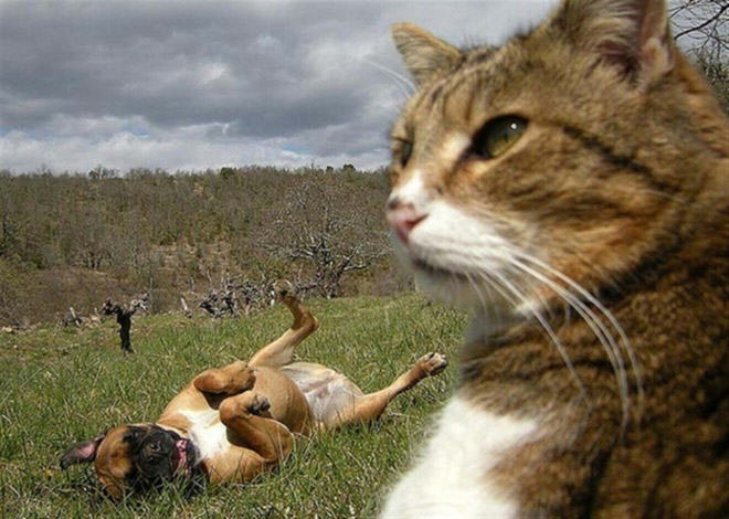 Cat Selfie_off focus