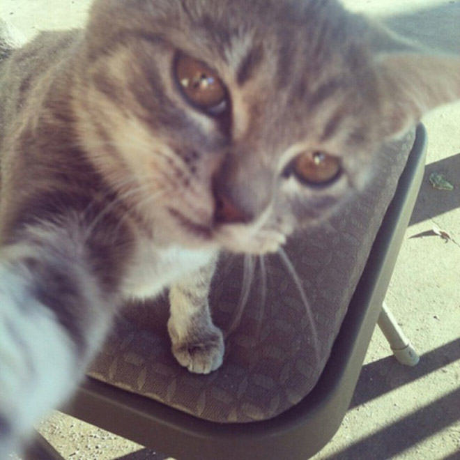 Cat Selfie_too high