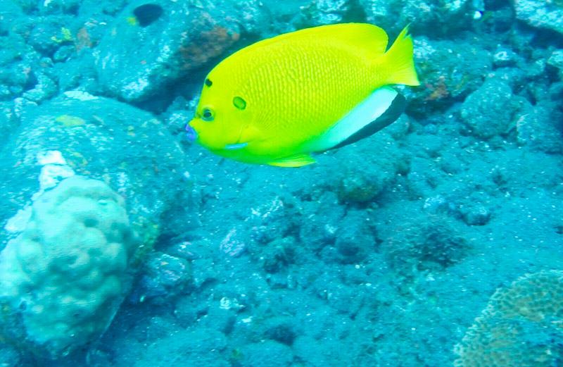 Fish 2 - M