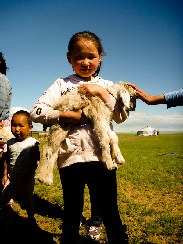 Mongolia_Sheep