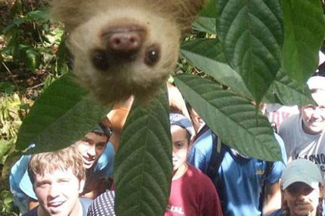 Photobomb_sloth