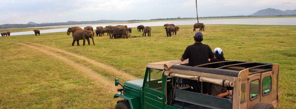 Sri Lanka - Elephant