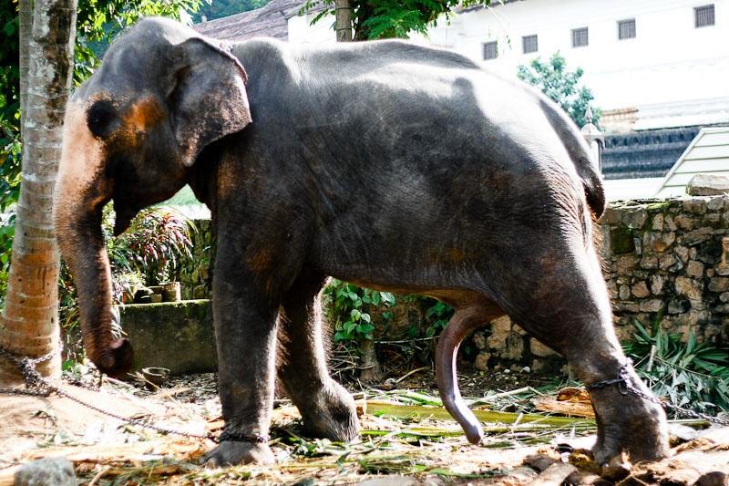 Sri Lanka_27