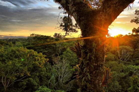 Oriente Amazon