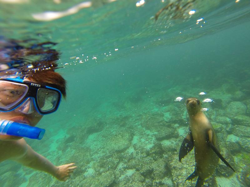 Galapagos Islands Sea Lions