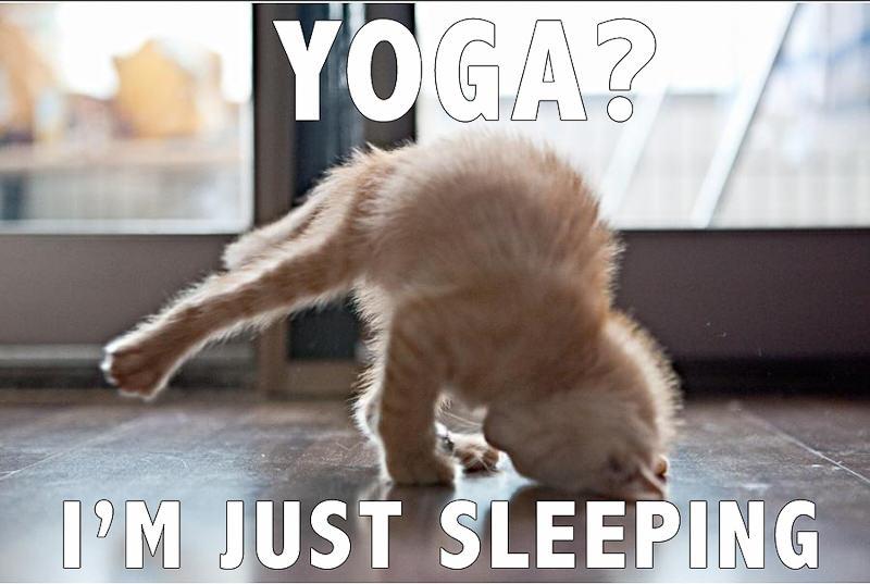 k - cat yoga