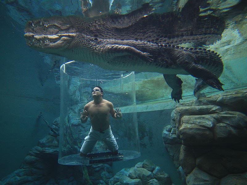 Darwin Crocodile Australia