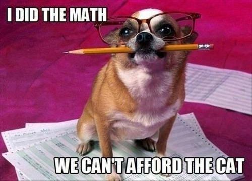 budget dog meme