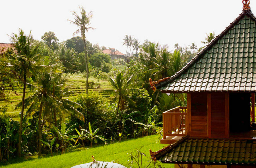 Bali - Bungalow on a rice field