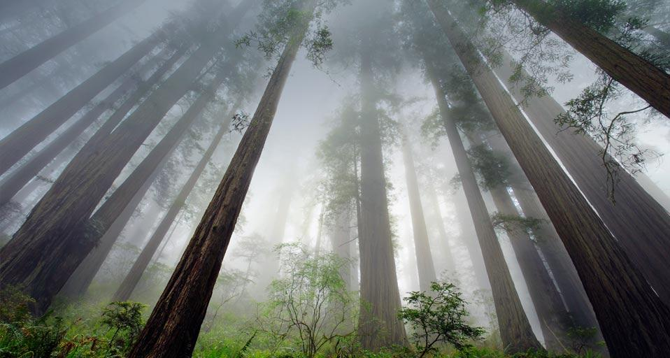 redwood_trees_redwood_national_park_california_usa_20120427