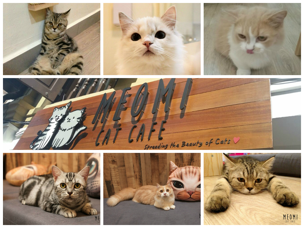 meomi cat cafe singapore