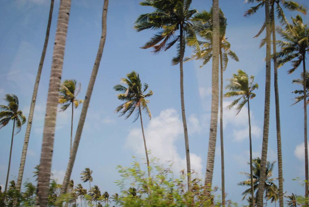 Bintan - palm trees