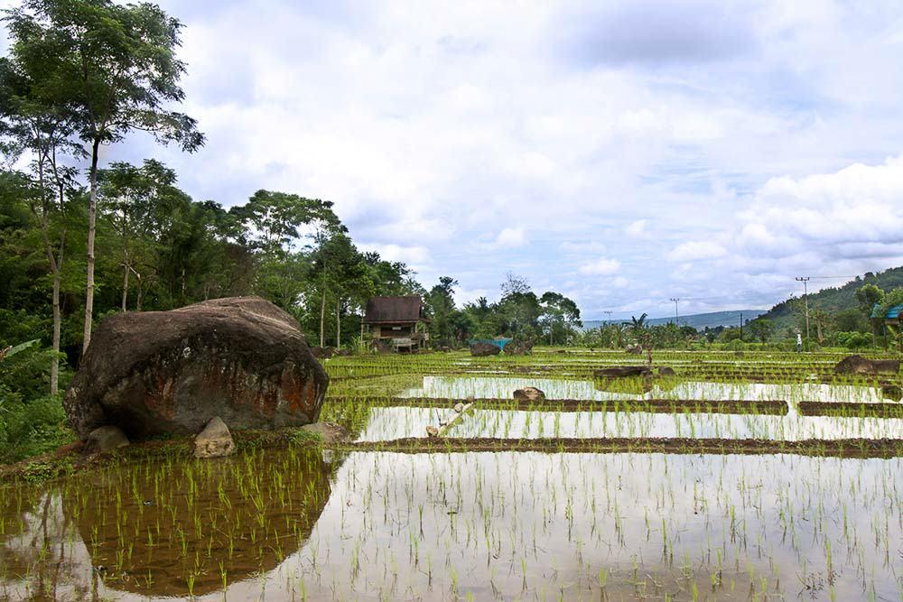 Pagar Alam - South Sumatra-Megaliths in Plantation