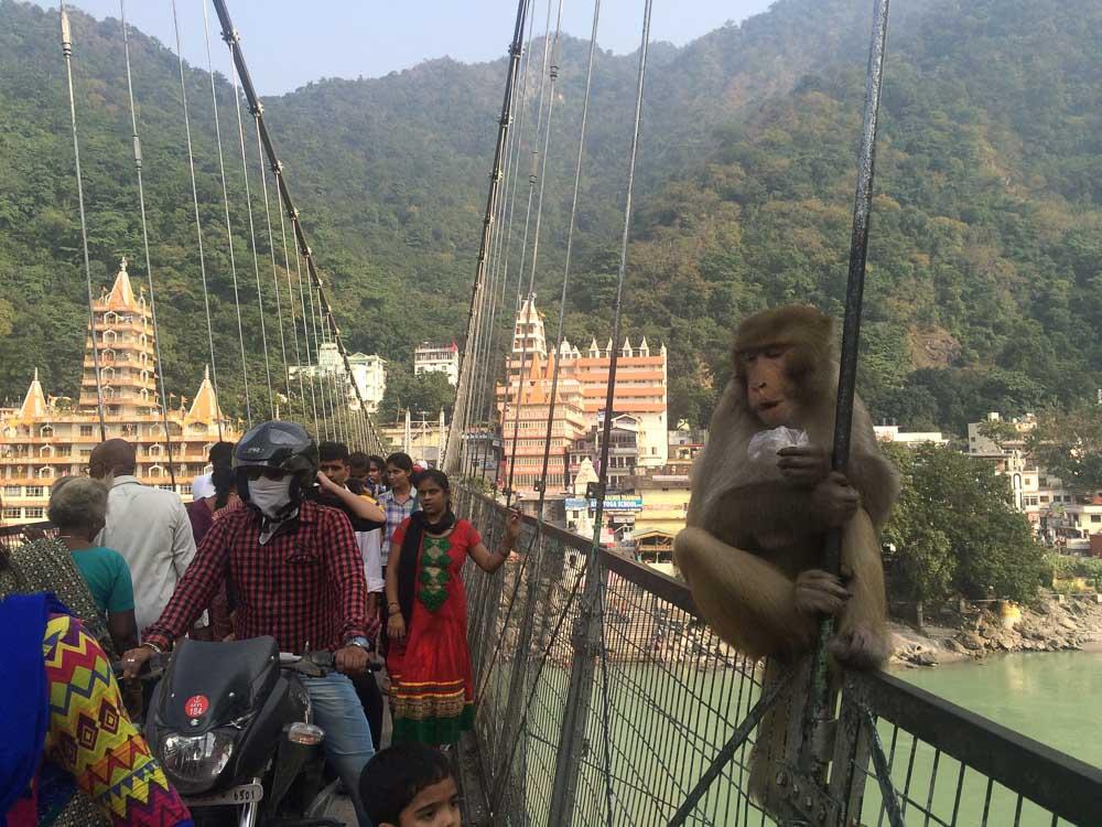 Ram Jhula Bridge - Yoga in Rishikesh-12