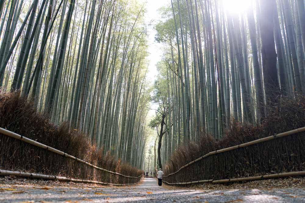 Arashiyama Bamboo Grove - Kyoto Japan Travel Guide-3