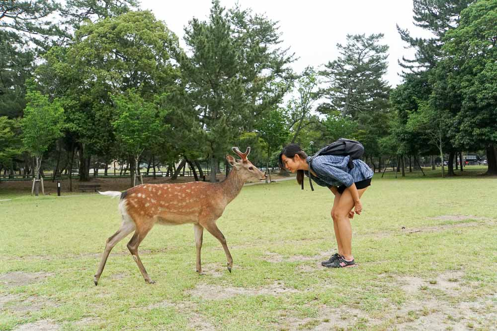 Deers Bowing - Nara Japan Travel Guide-2