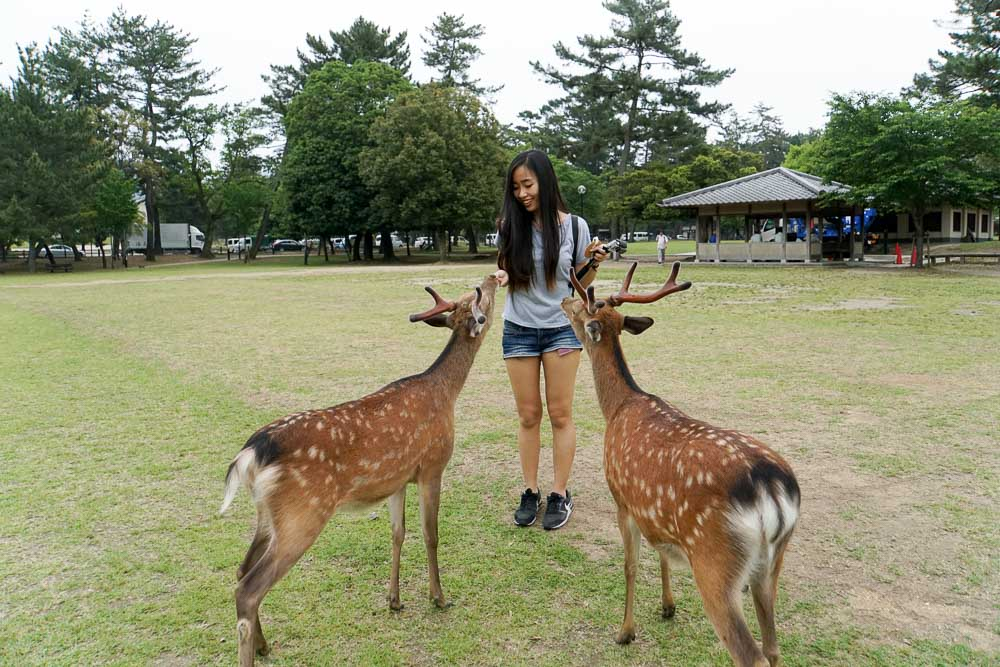 Nara Deer Park - Nara Japan Travel Guide-3