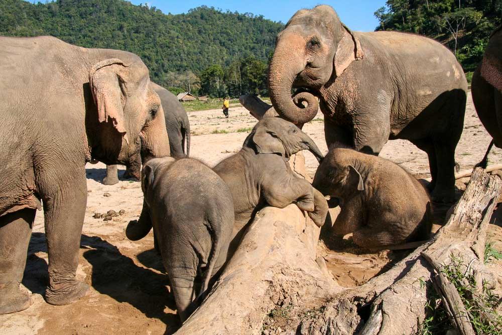 Elephant Nature park - chiang-mai-guide