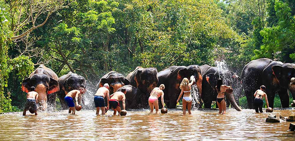 Bathing Elephants at the Patahara Elephant Camp - chiang-mai-guide