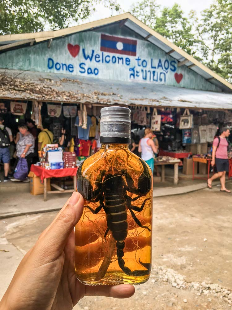 Scorpion infused in whiskey - Adventures in Chiang Mai
