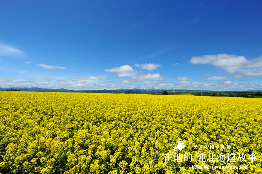 Hokkaido - Higashi Sorachi Canola Fields