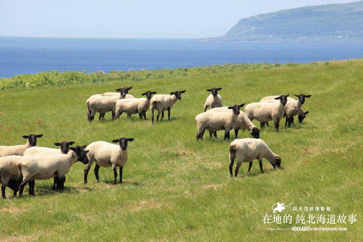 Hokkaido - RUMOI area Yagishiri Suffolk Sheep Pastures