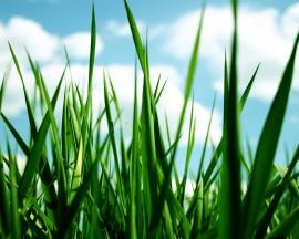 Grass-grass-30825826-1280-1024