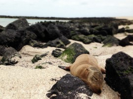 Galapagos 17